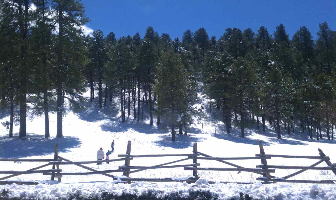 Sledding in Flagstaff